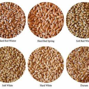 انوع گندم از نظر صنعتی و کشاورزی
